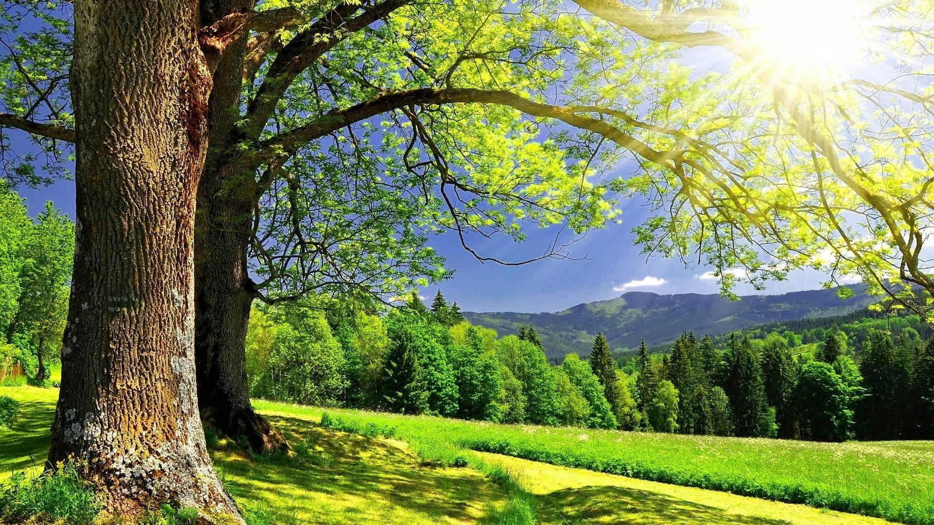 د امام حسن (رض) په اړه نبوي احادیث